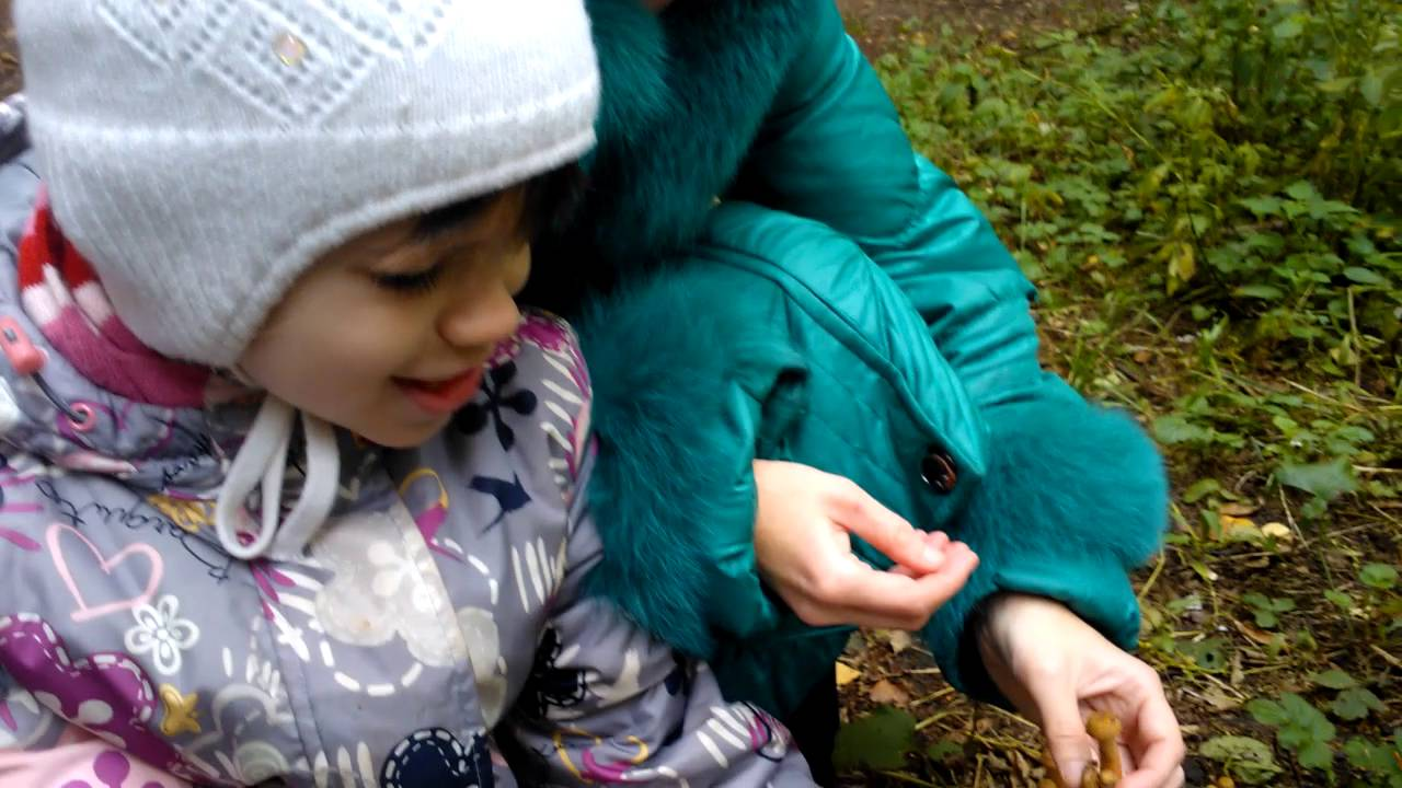 Золотая осень в парке Кузьминки - YouTube