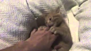 Руки вверх котенок