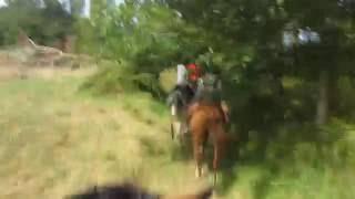 Françounet galope dans le Périgord ! ( août 2016 )