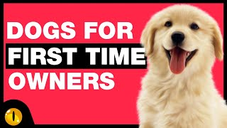 TOP 10 DOGS FOR FIRST TIME OWNERS