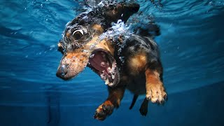 Never Let Your Dog Swim Underwater