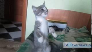 """Котенок выполняет команду """"Зайка"""""""