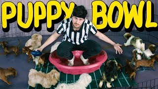 Puppy Bowl in Real Life (Way too many puppies)