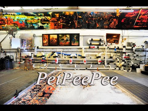 PetPeePee Service for Pet Owners - Oriental rug cleaning