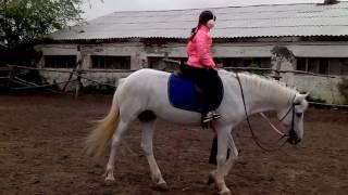 Занятие конный спорт эподром