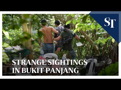Strange sightings in Bukit Panjang | The Straits Times