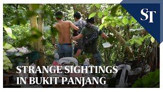 Strange sightings in Bukit Panjang | The Straits Times
