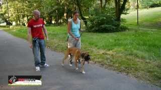 education canine cours collectifs