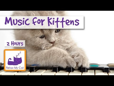 2 HOURS of Music for Newborn Kittens!