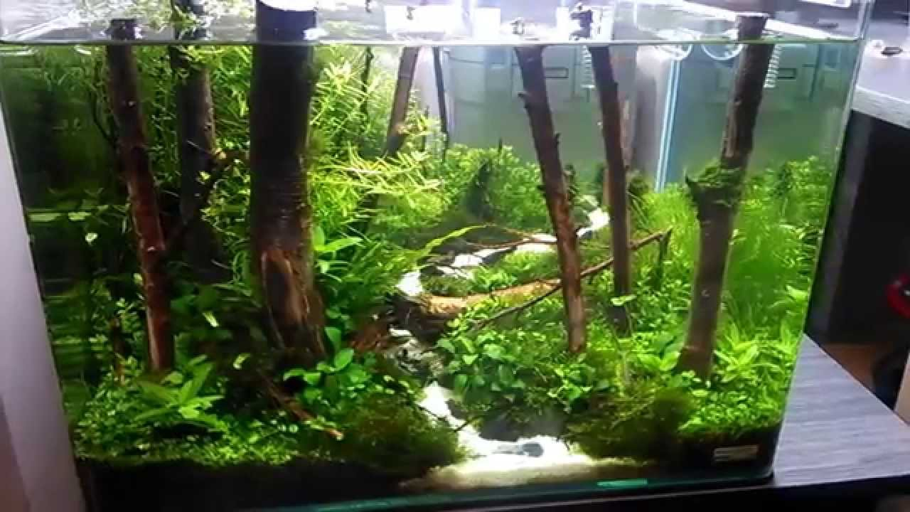 Forest Edge Scapers Tank Contest Youtube