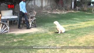 Training Argentino Dogs Videos