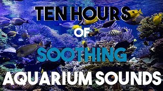 NO ADS Ten Hours of Aquarium Sounds || Soothing Bubbles || Room Ambiance