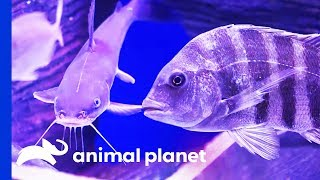 Shipwreck Themed Tank Is Full Of Incredibly Interesting Fish! | Tanked