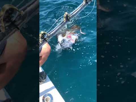 Huge Goliath Topwater Eat #Shorts