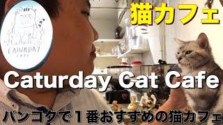 【ねこ】バンコクで1番おすすめの猫カフェ Caturday Cat Cafe