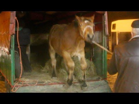 Konie skazane na rzeź [Reportaż]