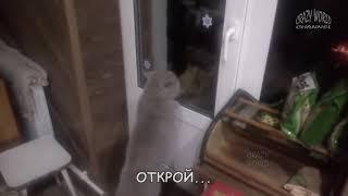 Говорящие коты! Лучшая подборка