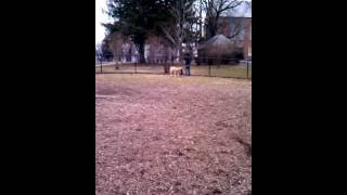 Beau At The Dog Park 02/14/12