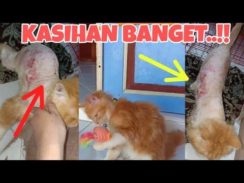 Kucingku Sakit Luka Dan Jamuran Parah Cukur Bulu Kucing Part 2 Youtube