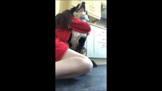 """Precious Dog Reaction to """"Hug Your Dogs and See What They Do"""""""