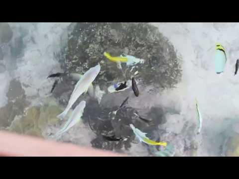 Bora Bora, French Polynesia - Feeding the Fish From Our Overwater Bungalow HD (2017)