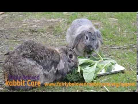 Fairly Beloved Rabbit Care - March 2014 Appeal