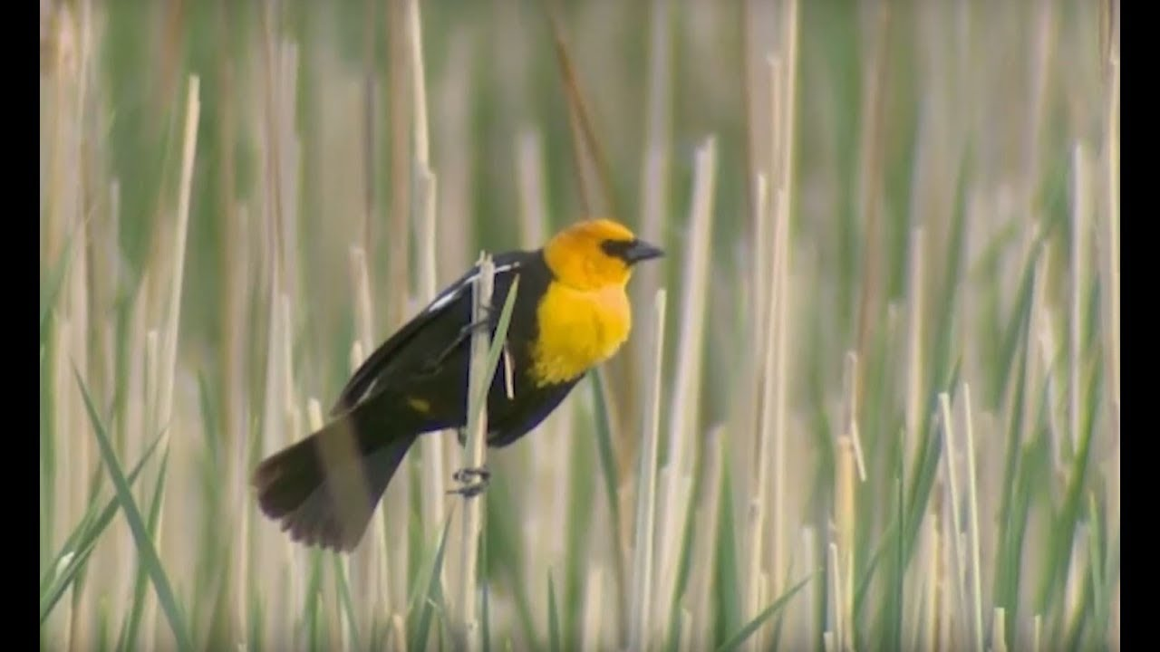 Take Part in the Great Backyard Bird Count - YouTube