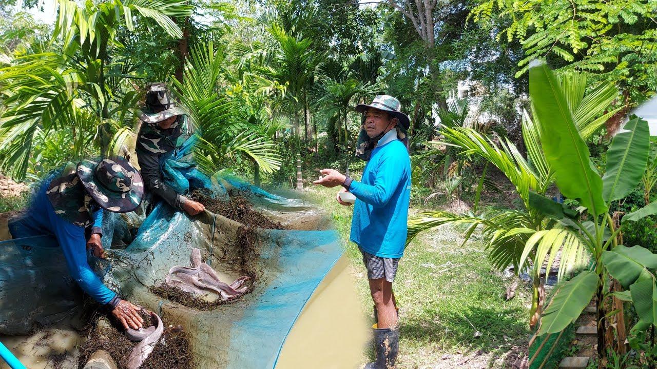 ทำเกษตรผสมผสานเลี้ยงปลารอบบ้าน!!สร้างรายได้3แสนบาทต่อปี