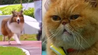Pets in Hong Kong don fitness trackers