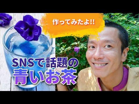 青い高級お茶!バタフライピー茶を作ってみた!タイ南国の島生活