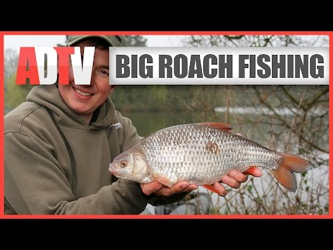 How To Catch Big Roach - Roach Fishing Rigs, Tips & Tactics