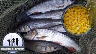 Консервована Кукурудза Смакує Цій Рибі