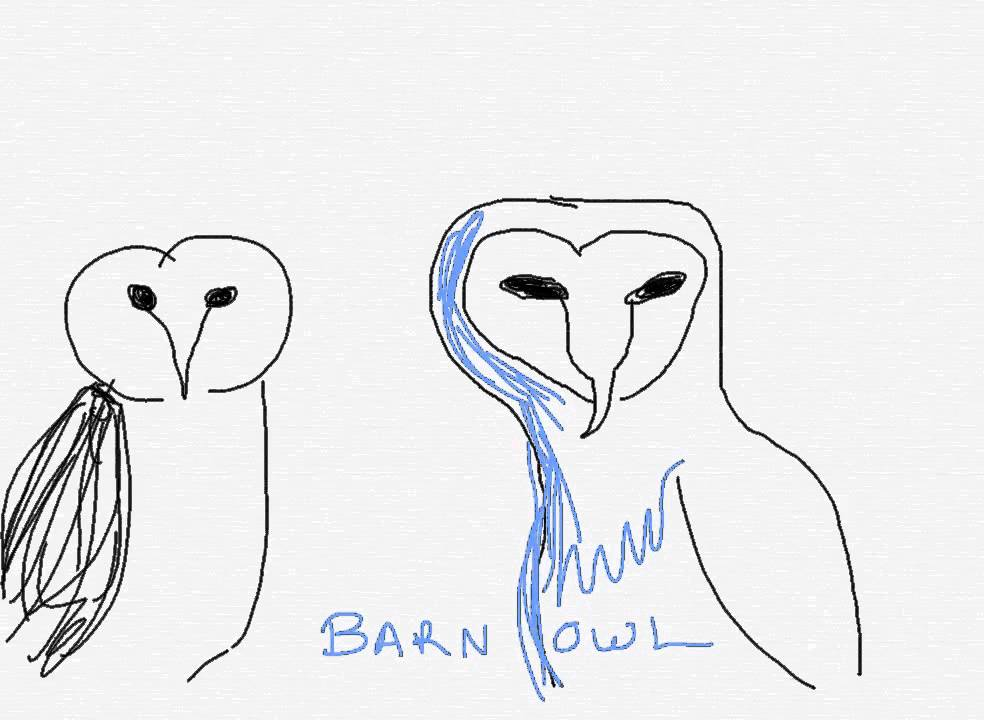 How To Draw A Barn Owl Youtube