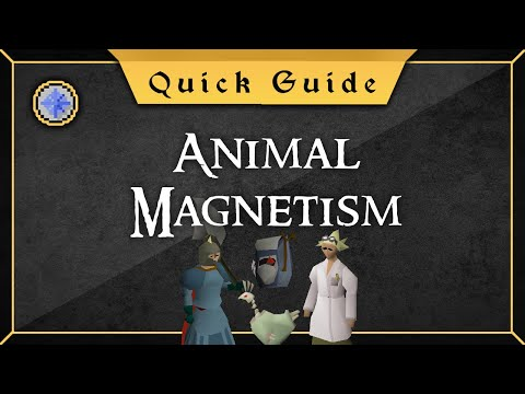 [Quick Guide] Animal Magnetism
