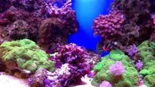 Купить морской аквариум в АкваИнтерио.(, 2013-05-17T14:18:04.000Z)