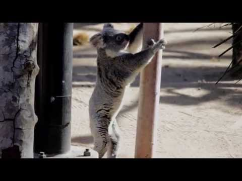 Conservation in Zoos