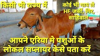 अपने एरिया मे गाय भैंस कहा से खरीदे। online cow supplier।where to buy Desi Gir,HF,jersay,Sahiwal.