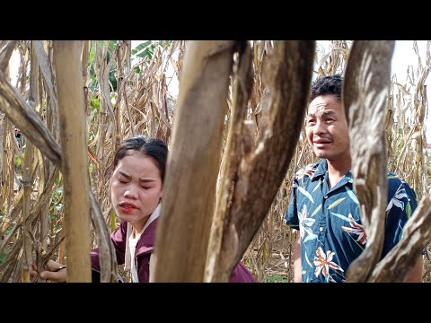 hmong new movie project 2019 hmong sib deev zoo nyob heev MV movie  Hmong Drama Watch NOW thumbnail