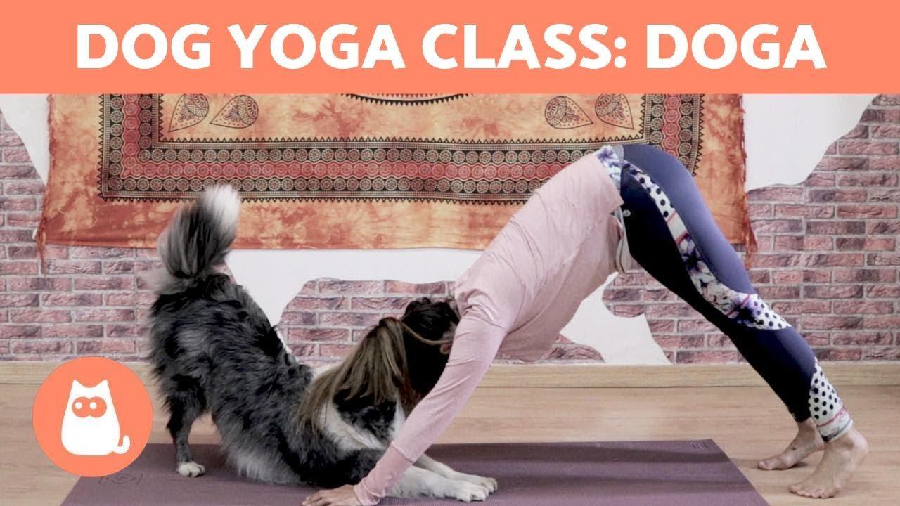 Download DOG YOGA Class: DOGA