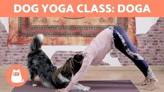 DOG YOGA Class: DOGA