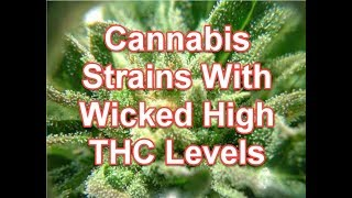 Cannabis Strains With Wicked High THC Levels