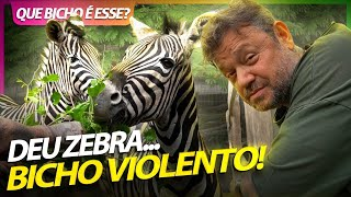 ENCARANDO ZEBRAS VIOLENTAS!   RICHARD RASMUSSEN