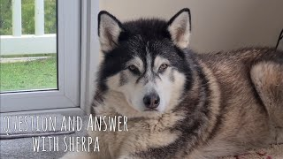 Your questions answered about husky Sherpa