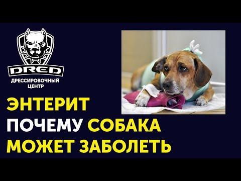 Одна из причин болезни энтеритом | На что обратить внимание при покупке собаки