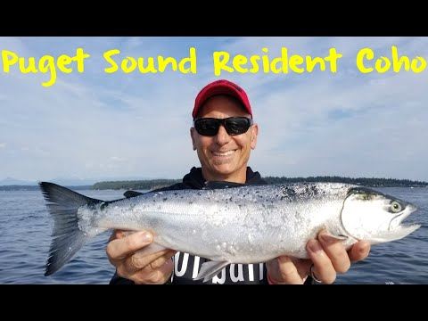 Puget Sound Resident Coho Fishing