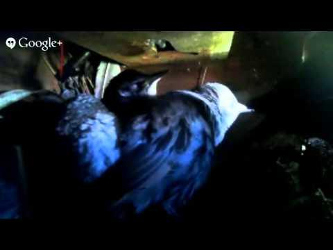 Starling nest box