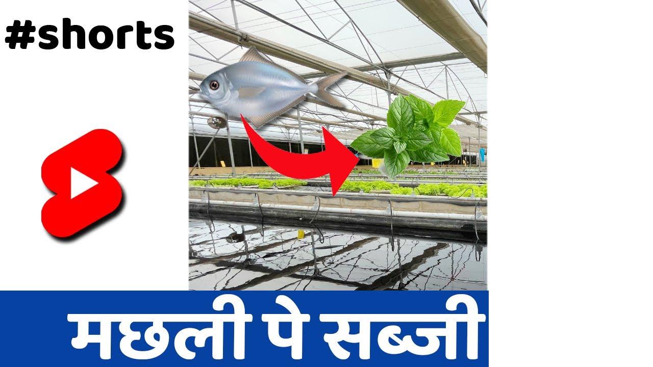 नए तरीके से खेती 🔥 #SHORTS #INDIANFARMER #KISAN