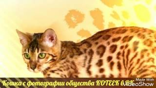 КОШКИ      слайд-шоу