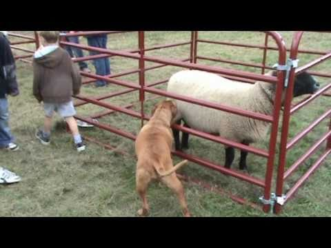Big Sky Ranch -Animal Shelter-