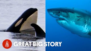 A Deep Dive Into the Lives of Sharks and Whales